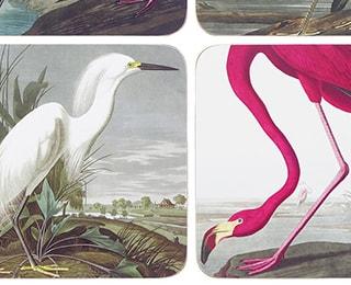 Audubon souvenirs