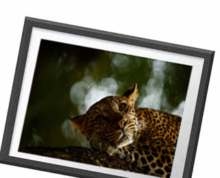 Wildlife Photographer of the Year 54 Prints