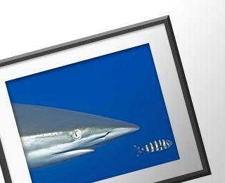 Sea life prints