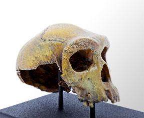 Replicas and 3D printed Museum specimens