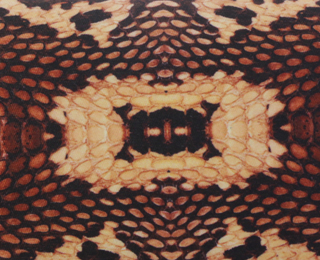 20% off snakeskin print fashion and gifts