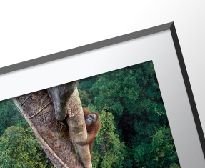 New: WPY 2016 wall prints