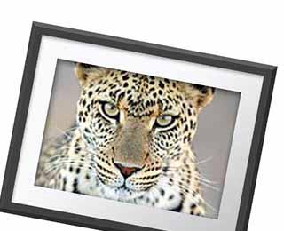 WPY 53 wall prints