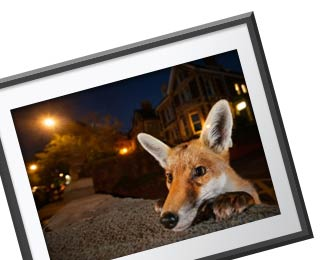 Wildlife Photographer of the Year 52 prints