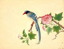 Red-billed blue magpie wall print