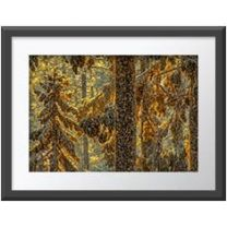 A Magnificence of monarchs wall print