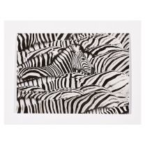 Life in Black and White greetings card: Wildlife Photographer of the Year 57