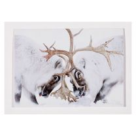 Head to Head Christmas card: Wildlife Photographer of the Year 57