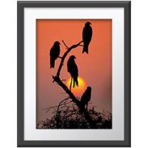 Black kites, red sun wall print