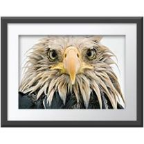 Bold eagle wall print