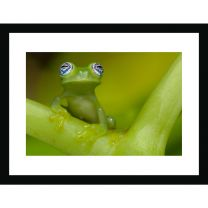 Ghost frog wall print