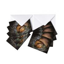 Drey Dreaming set of 8 Christmas cards: Wildlife Photographer of the Year 2020