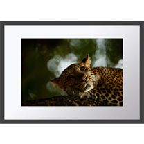Lounging Leopard wall print