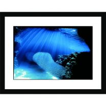 The swirling shoal wall print
