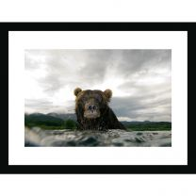 Bear glare wall print