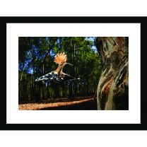 Hoopoe delivery wall print