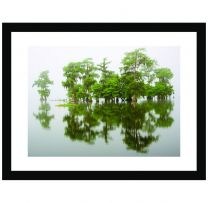 Swamp cypress wall print