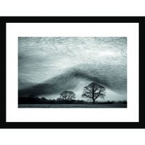 Starling wave wall print