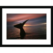 Southern right whale fluke wall print