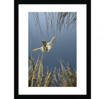Barn owl - a vole's eye view wall print