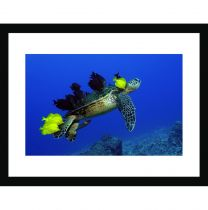 Green turtle grooming wall print
