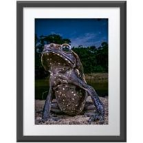 Toad with attitute wall print