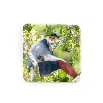 Treetop Douc coaster: Wildlife Photographer of the Year 2020