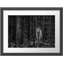 Wolf watch wall print