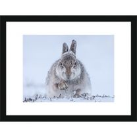 Snow Hare 2015 wall print