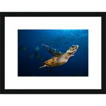 Turtle Flight wall print