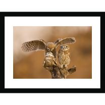 Little owls on top wall print