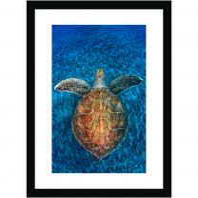 Turtle gem wall print