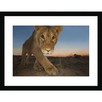 Curiosity and the cat wall print