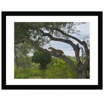 Crouching leopard wall print