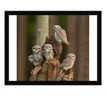 Owlets united wall print