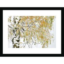 Golden birch wall print