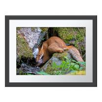 The Fox That Got The Goose wall print