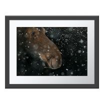 Snow Moose wall print
