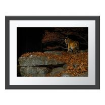 Taiga Tiger In The Night wall print