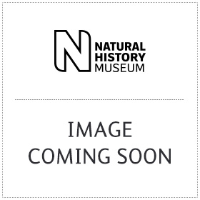 Natural Frame wall print