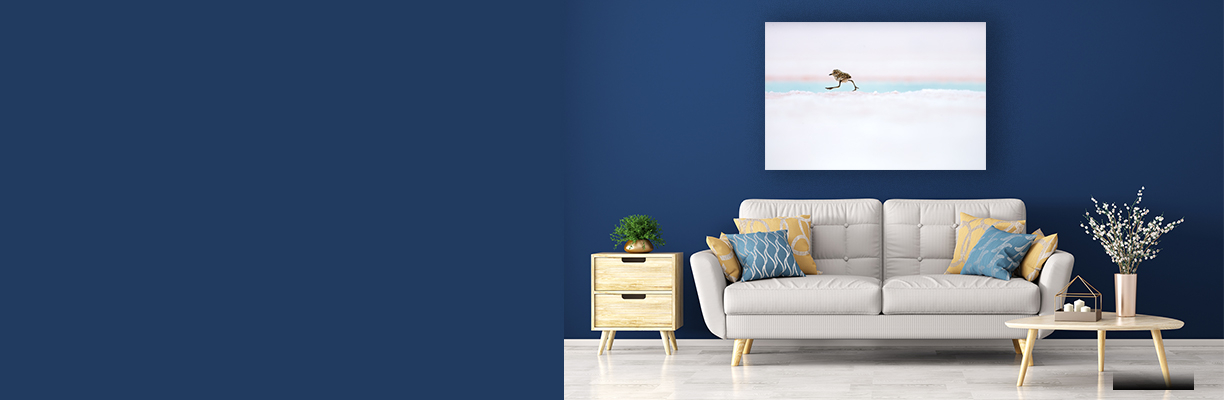 Argentine Quickstep on navy blue wall in a living room