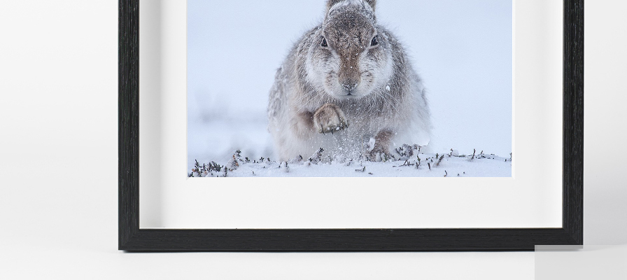Wall print Christmas gifts from £20 - Natural History Museum online shop
