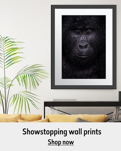 The Reflection print hangs on the wall above a yellow sofa and beside a plant. The text reads 'Showstopping wall prints. Shop now'.