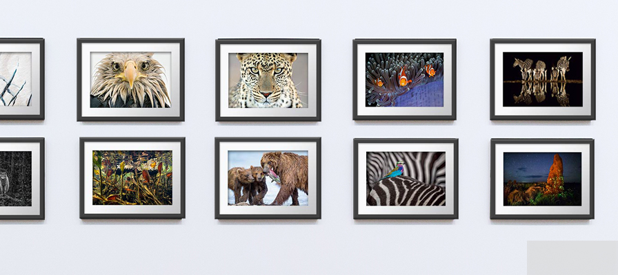 A row of WPY prints in a gallery