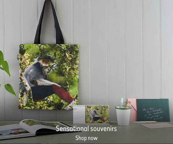 A Treetop Douc tote bag hangs on the wall above a desk setting. The text reads 'Sensational souvenirs. Shop now.'