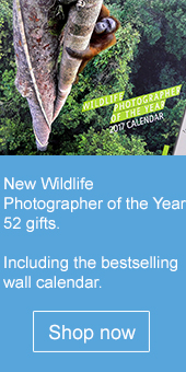 WPY52 gifts