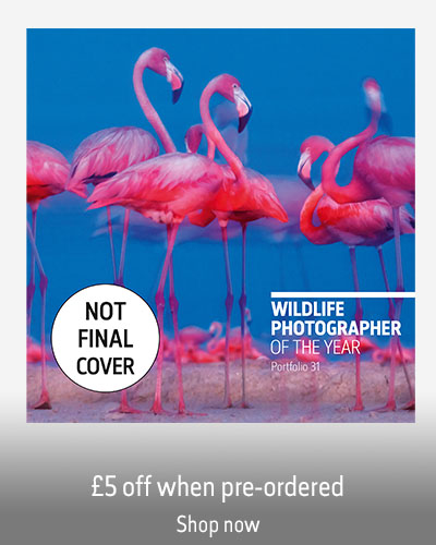 A mock up of the Wildlife Photographer of the Year portfolio 31 book on a grey background. The sticker reads Not final cover and the text reads £5 off when pre-ordered. Shop now.