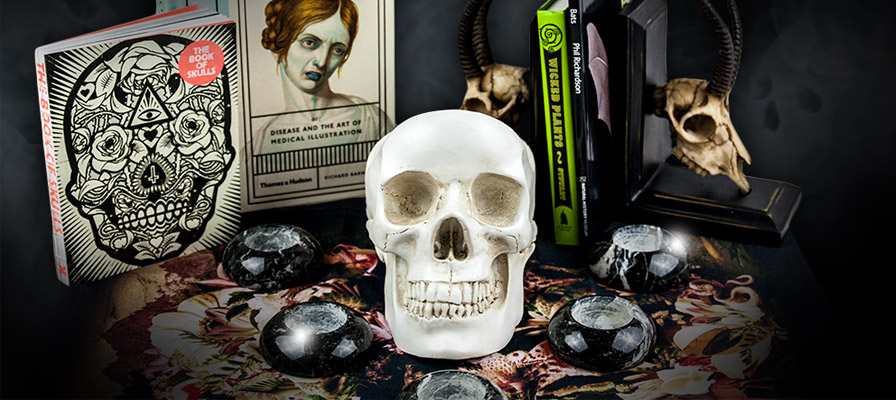 Skull and candles | Natural History Museum online shop