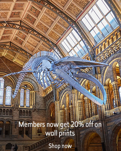 Hope the blue whale in Hintze Hall. The text reads 'Members now get 20% off on wall prints'.