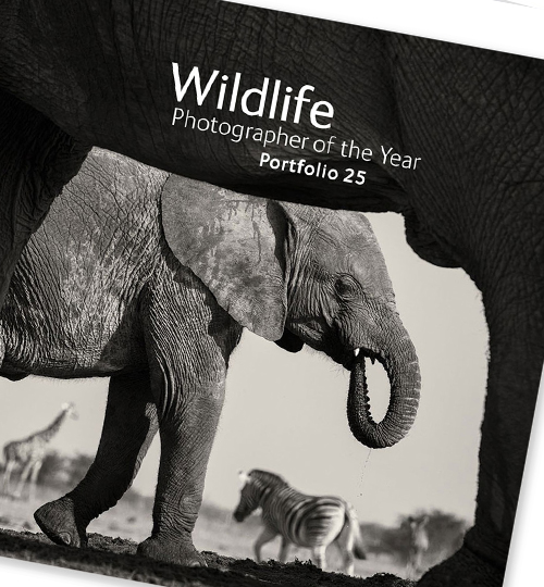 10 off portfolios | NHM shop
